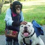 チンパンジーパンくんが暴れた原因は?襲われた女性とは誰?【画像】